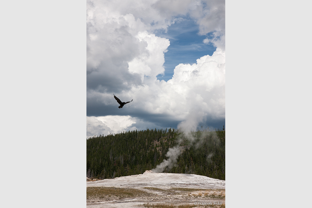Old Faithful Geyser and the raven