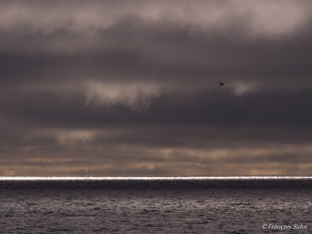 Mer et goéland  (Svalbard)