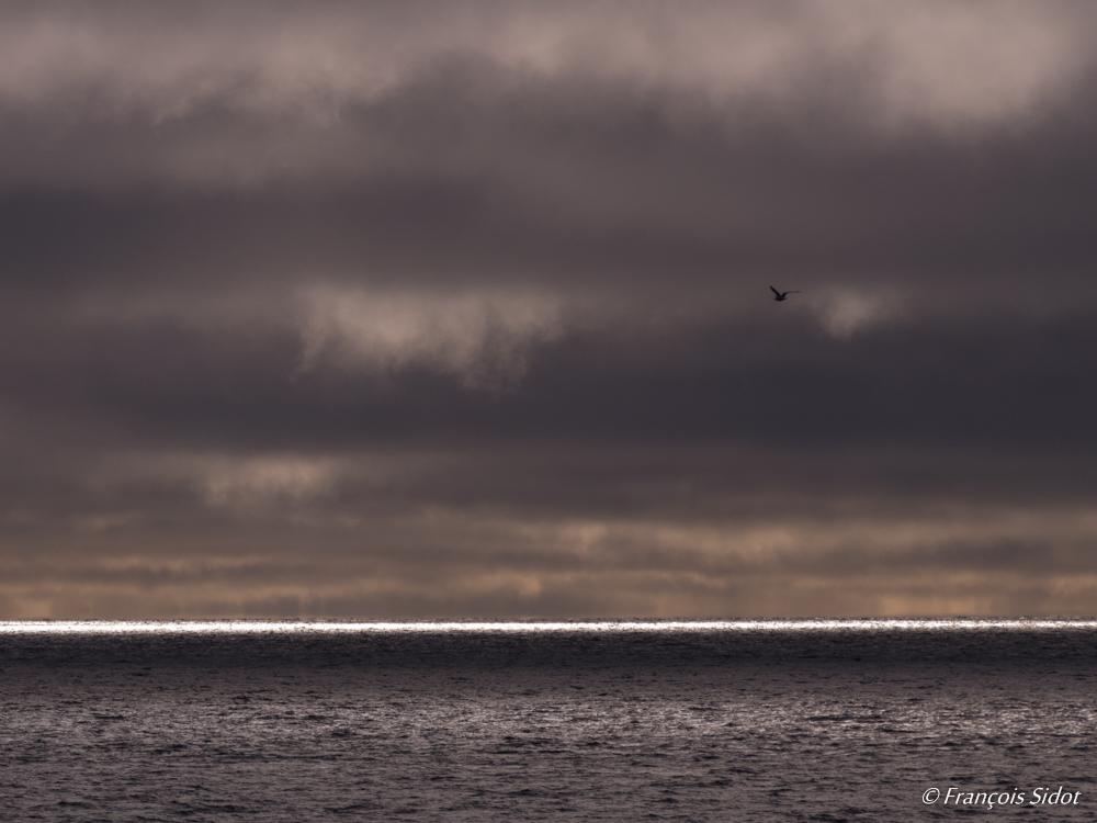 Sea and gull (Svalbard)