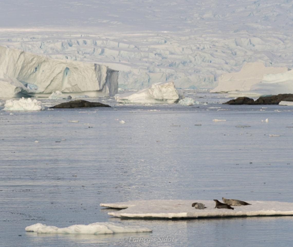 Continent Antarctique