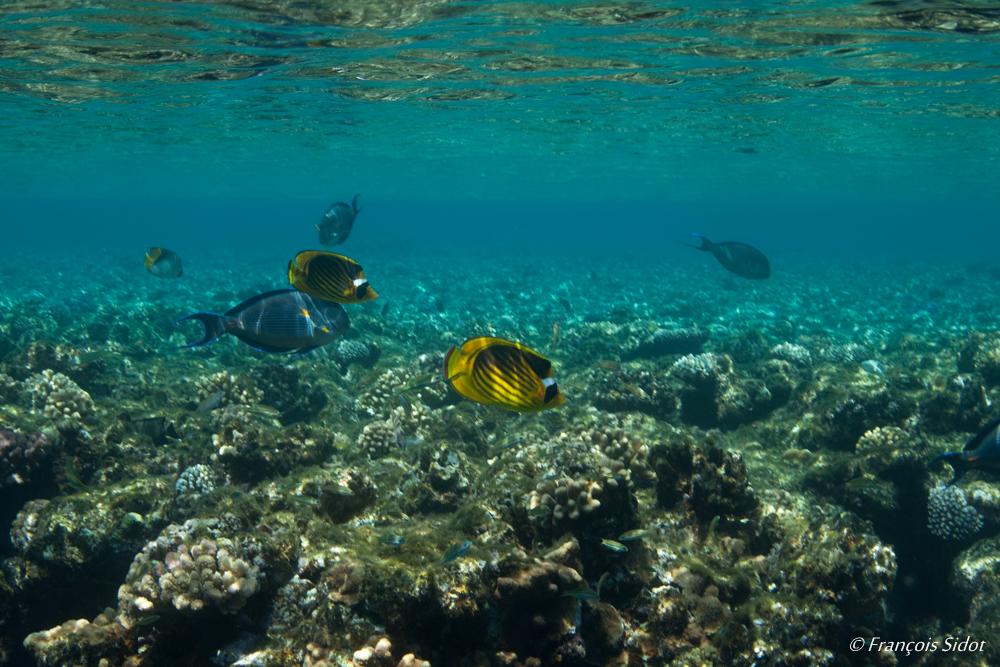 Sous la surface en Mer Rouge
