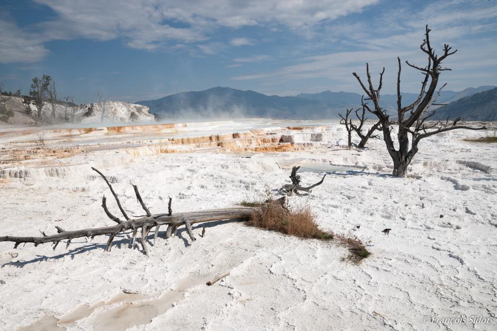 Sources d'eau chaude et arbres morts - Yellowstone