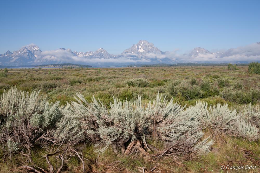 Montagne du Grand Teton