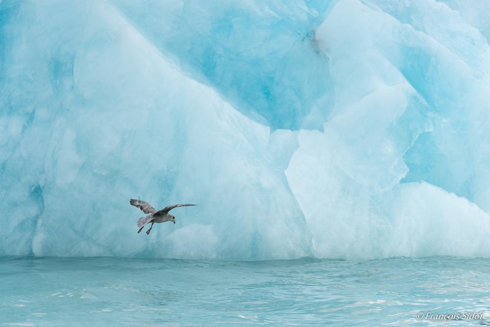 Petrel et glace